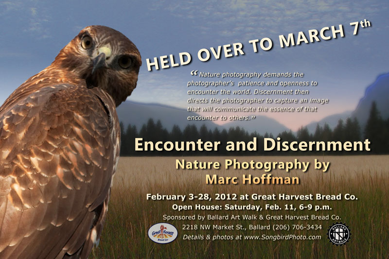 February Photo Exhibit at Great Harvest Bread Company, Ballard